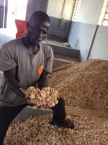 Rubberwood chips is Feedstock for PP